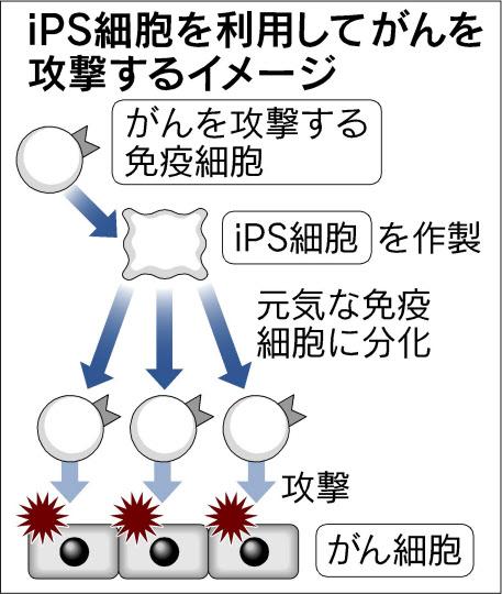 http://www45.atwiki.jp/jippensha/?cmd=upload&act=open&page=%E3%83%96%E3%83%AD%E3%82%B006&file=28_iPS%E7%B4%B0%E8%83%9E%E3%81%8C%E3%82%93%E6%94%BB%E6%92%83.jpg